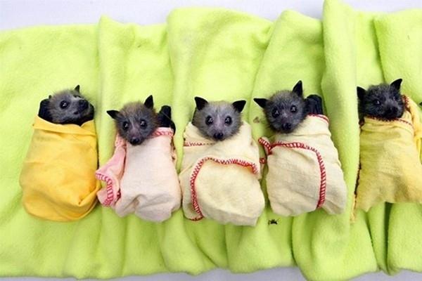 bats-via-utterlycute-com-and-buzzfeed